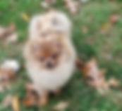 Winnie 10-28-19.jpg