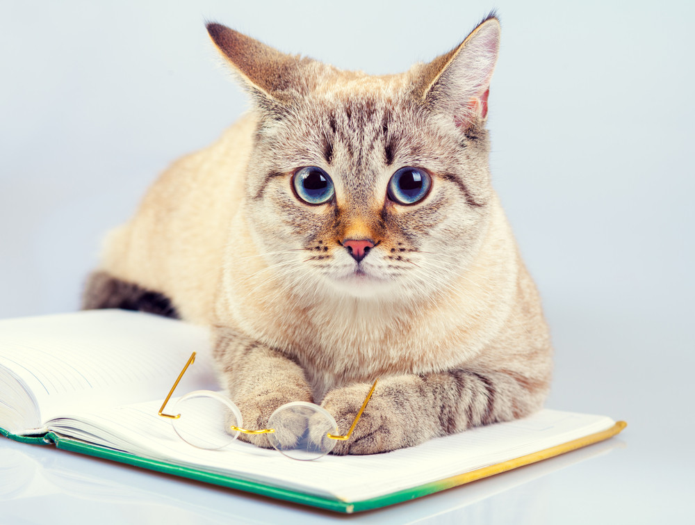 Host a Virtual Book Club