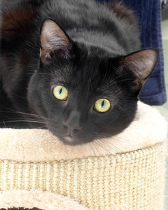 Matthew who is looking for his furrever