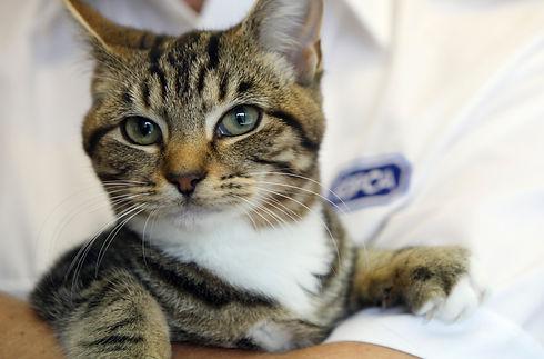 Tabby cat - 1083611.jpg