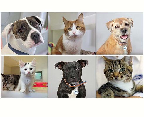 RSPCA Image animals.jpg