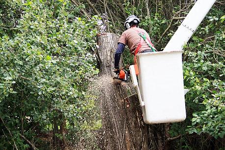 Western-Edge-Tree-Service-Hood-River-Arb