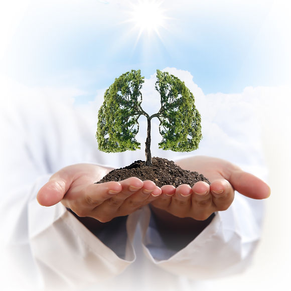 Conceptual image of green tree in hands