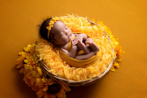 Newborn baby girl in a mustard yellow wrap and bow headband laying in a basket surrounded by sunflowers by Vancouver newborn photographer Amber Theresa Photography