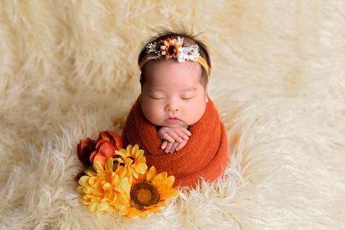 Newborn baby girl in pumpkin orange wrap and sunflower headband in potato sack pose on a cream flokai fur rug by Vancouver newborn photographer Amber Theresa Photography