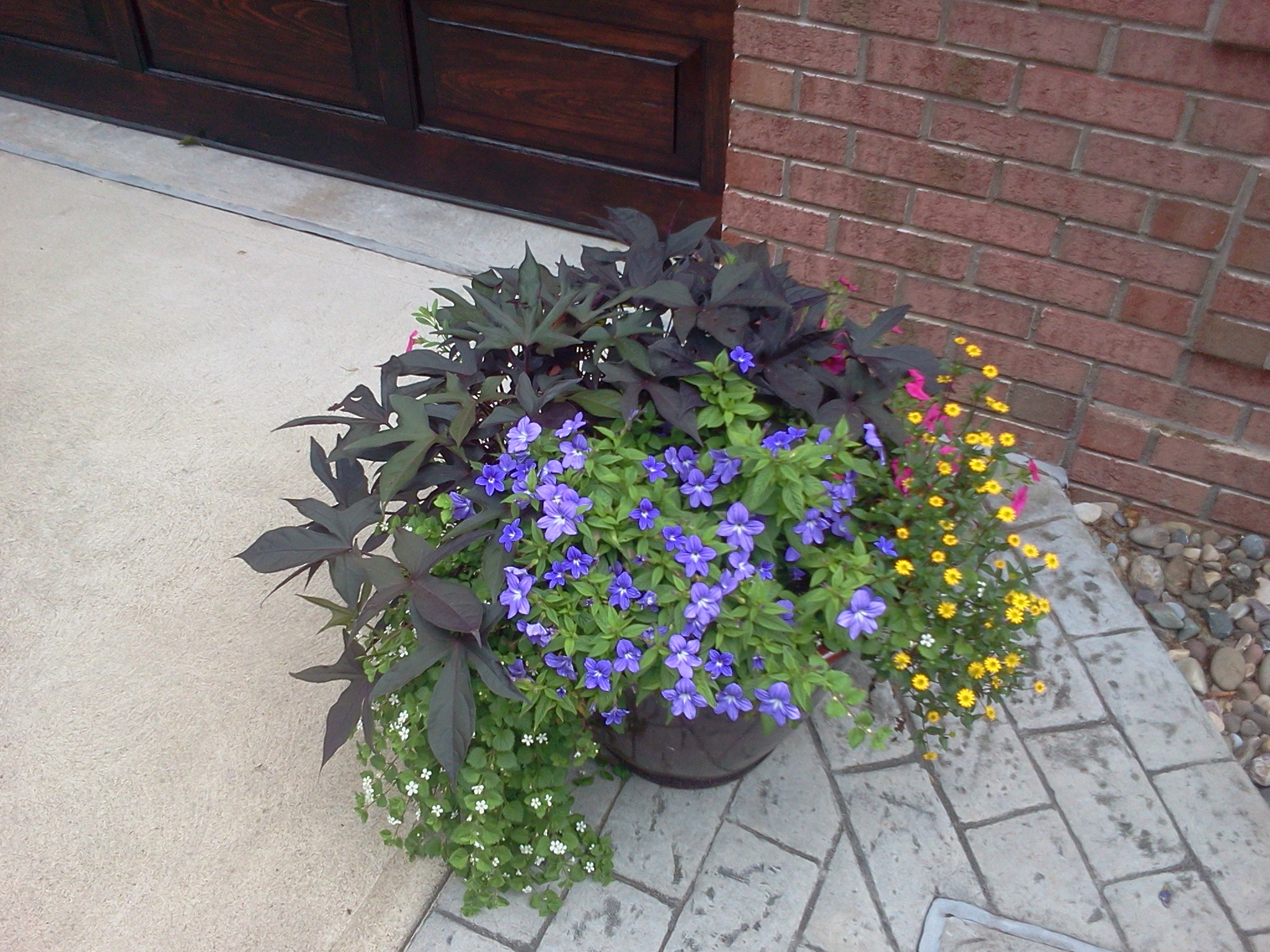 mixed annual planters