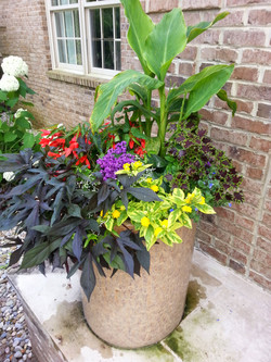 Dramatic entry way pots!