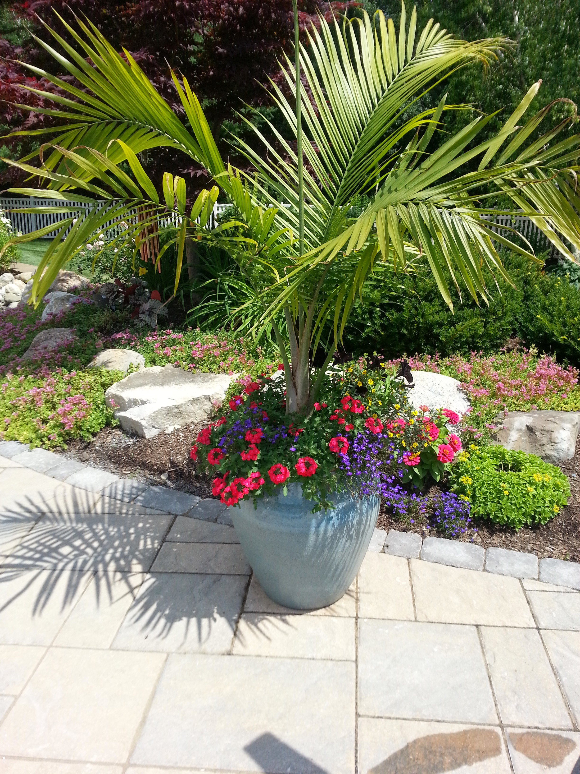 Majesty Palm with annuals