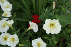 planter up close
