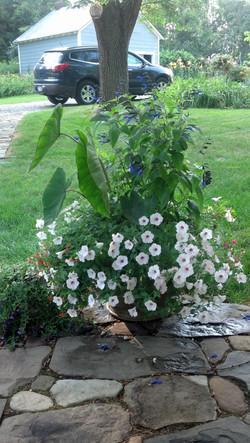 Calacasia mixed planter