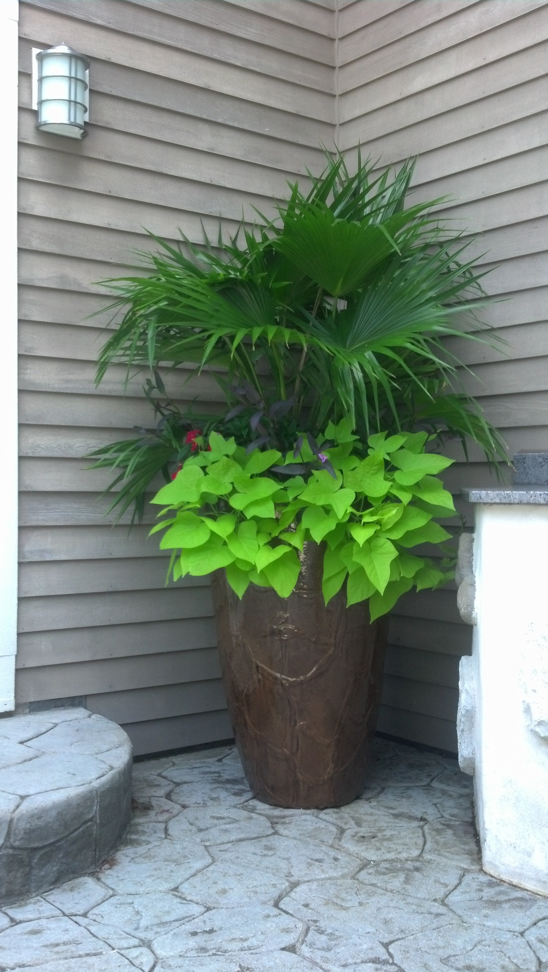 Majesty Palm mixed planter