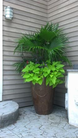 Majesty Palm mixed planter