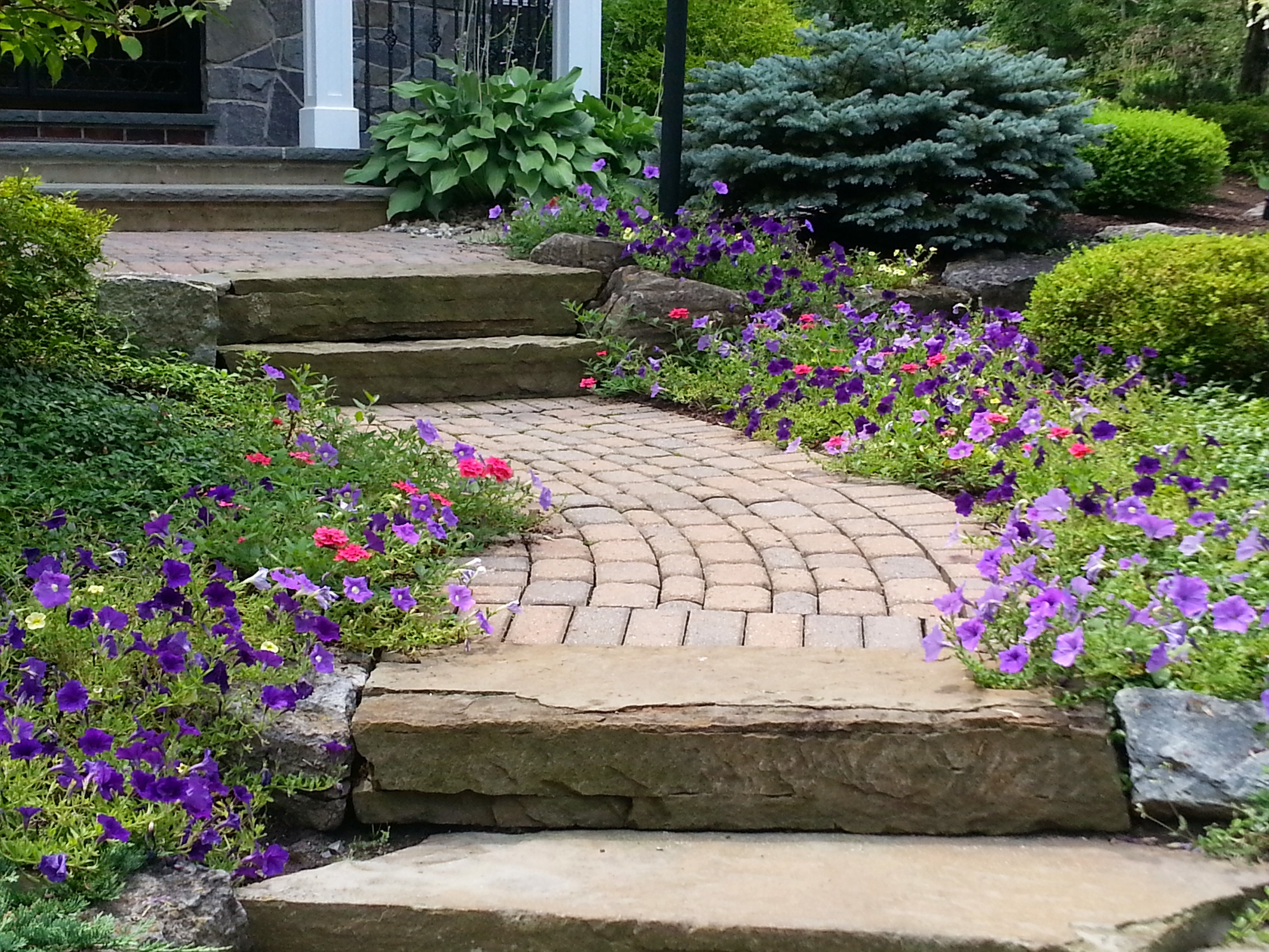 add color to your landscape!