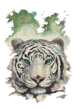 17 - Tigre Blanc
