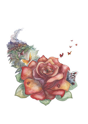 36 - Rose