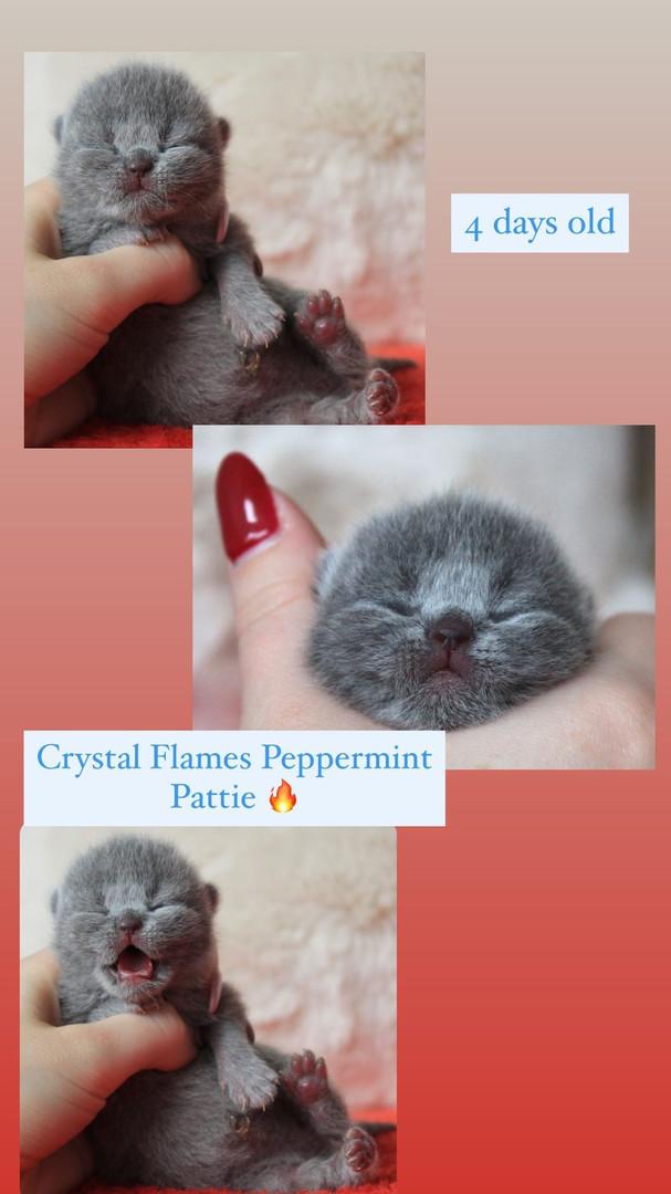 Crystal Flames Peppermint Pattie- Blue girl