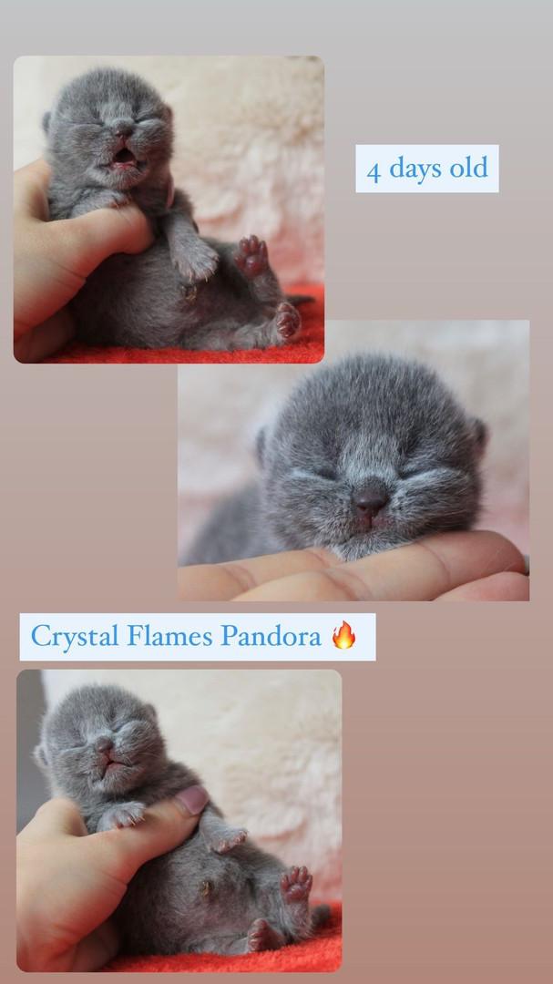 Crystal Flames Pandora- Blue girl