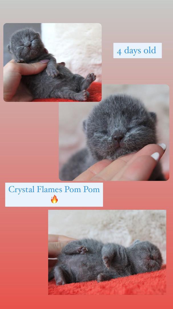 Crystal Flames Pom Pom- Blue boy