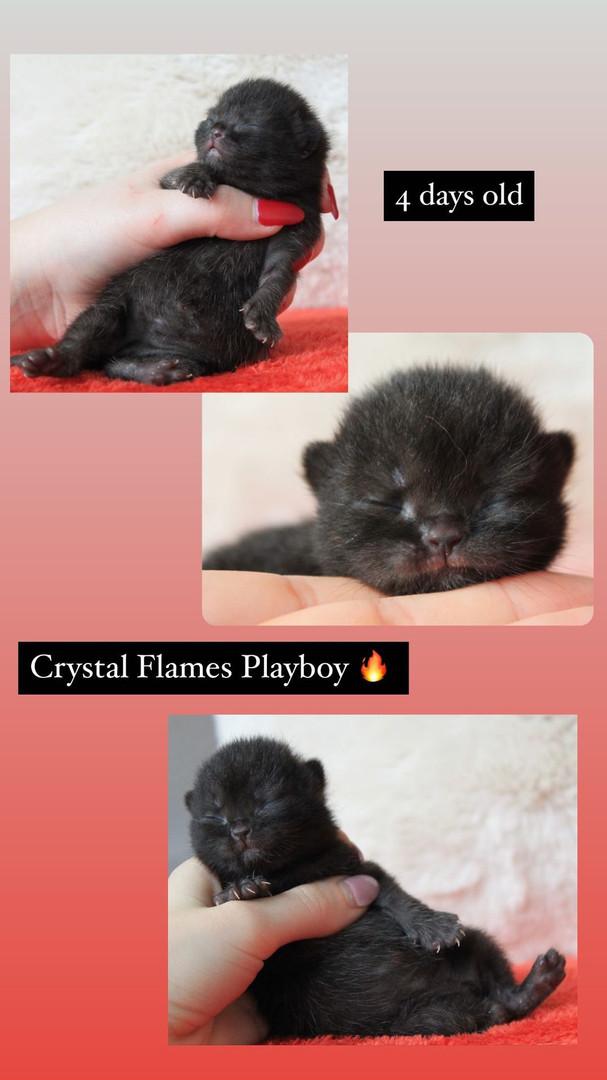 Crystal Flames Playboy- Black boy