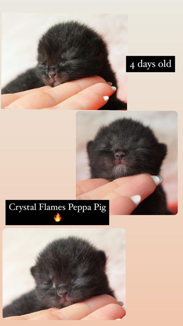 Crystal Flames Peppa Pig- Black girl
