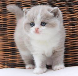 Pretty Pippa