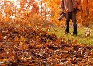 Fall Clean Up.jpeg