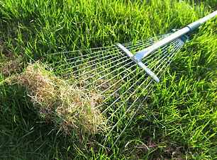 Dethatching-your-lawn.jpg