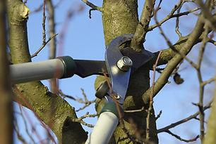 fruit-tree-pruning.jpg