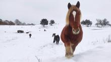 Moja droga z końmi