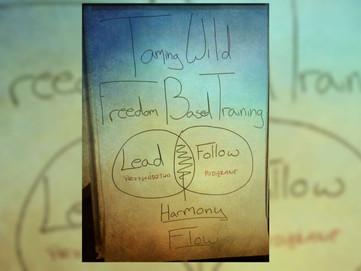 Freedom based training - trening oparty na wolności/swobodzie