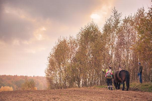 konie Kaszuby