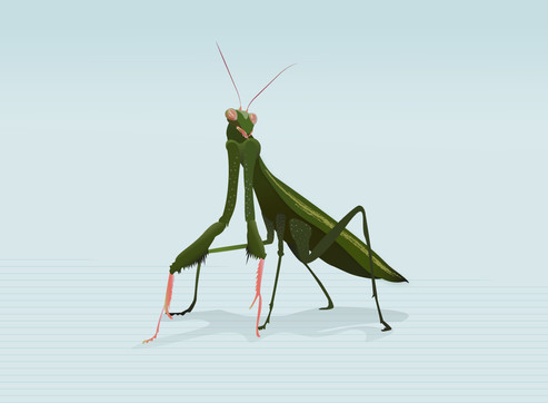Mantis Pal