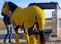 Iron Horse 03 WEB.jpg