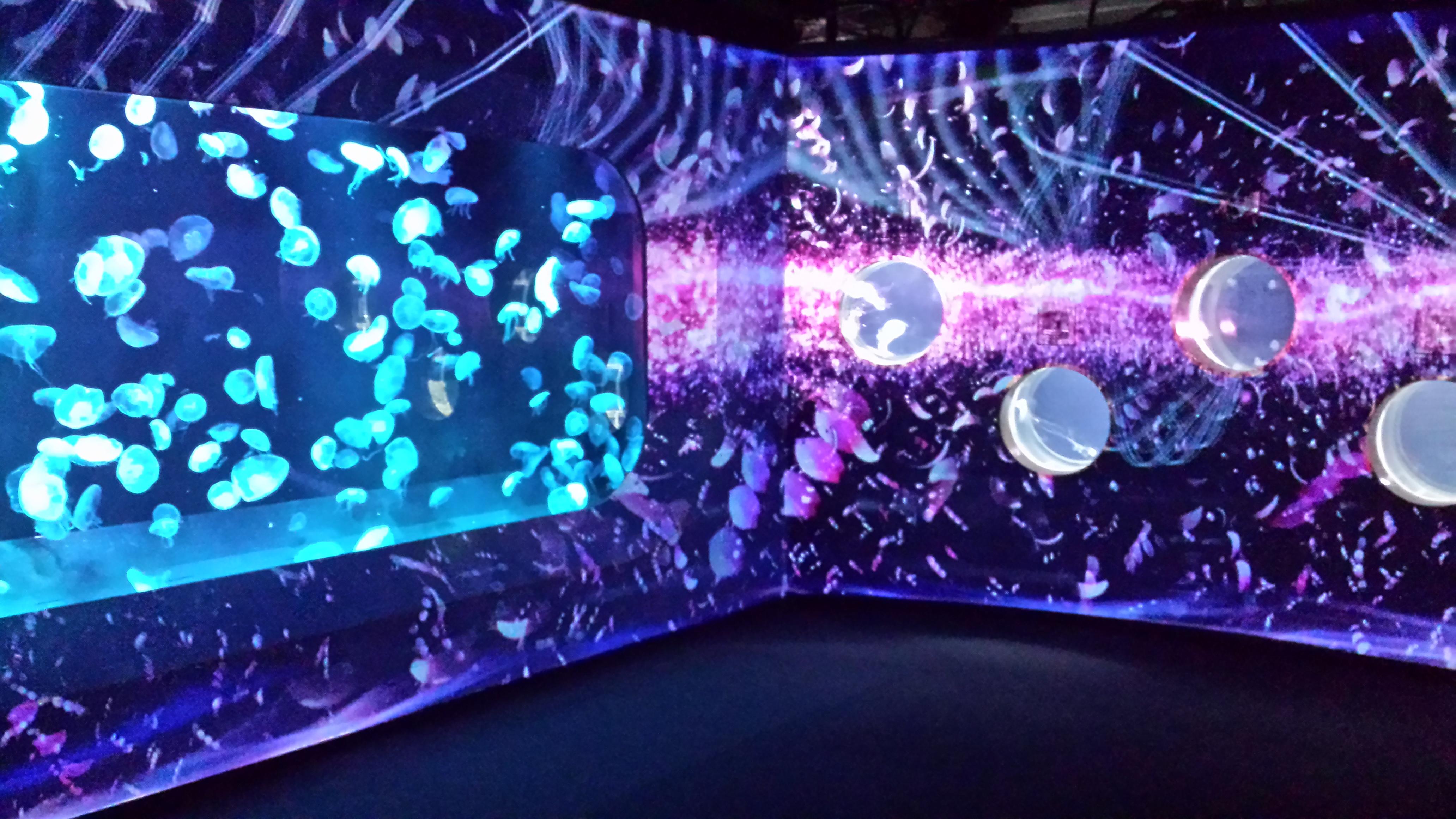 MAPPING @ Kyoto Aquarium