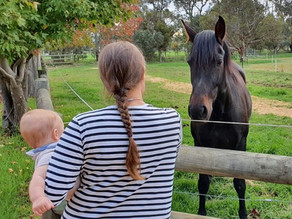 Babies and Horses – The Lies We Are Sold