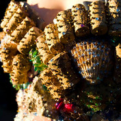 Close-up of the costume - corks and seashells trapped in fishnets intricately hand beaded.