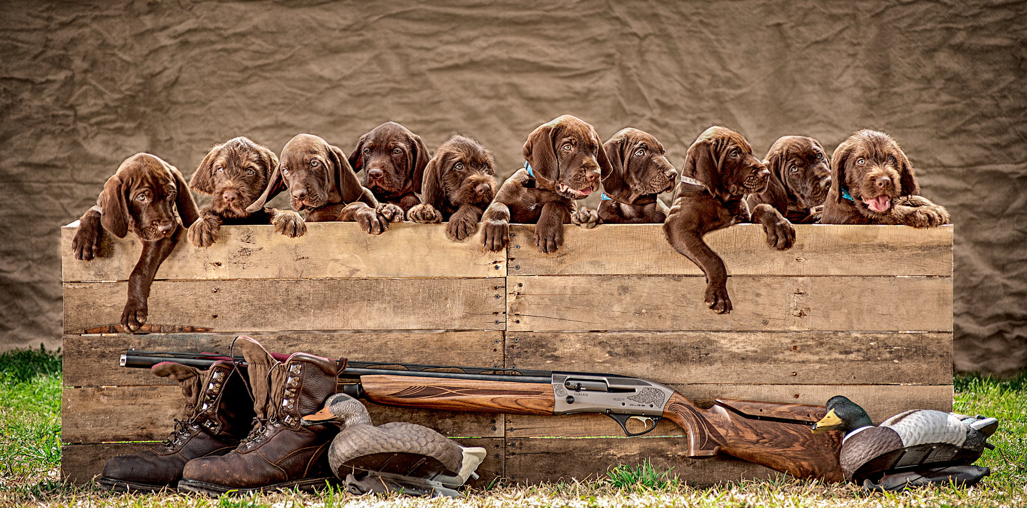 """Lone Pine Pudelpointers """"A"""" Litter"""