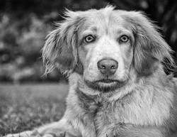 Pet_Portrait_Photograhper_Mobile_Alabama_-3.JPG