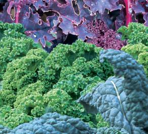 Keen on Greens - Starflower Kale Salad