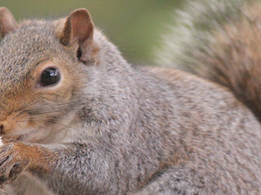 Ignore the squirrel and leave your wallet at home