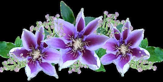 consels en Fleurs d Bach, gestion des émotions, kinésiologue gironde