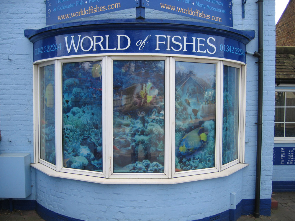 digitally-printed-window-graphics-world-of-fishes