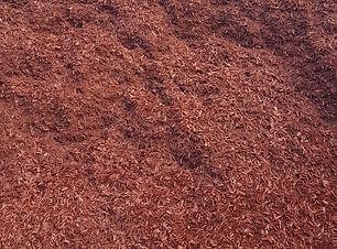 red cypress.jpg