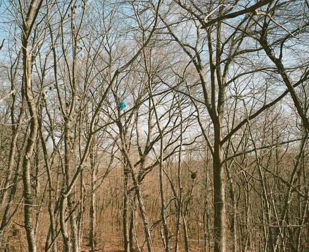 "Will Keat untitled01 medium format color photograph 35"" x 42"""