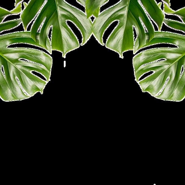 leaf2_edited.png