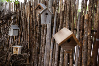 Birdhouses & Pollinators