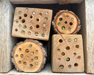 Nested Native Bees