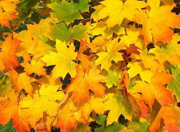 leaves-57427_1280.jpg