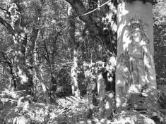 Résidence Les Veilleurs de vent. Dans le cadre de la fête de la nature octobre 2020. Réserve naturelle régionale de La Massonne (17). Crédit photo : Viviane Moore
