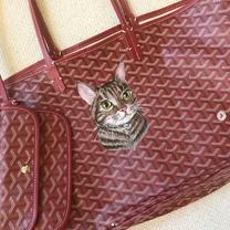 Pet Portrait Painted cat